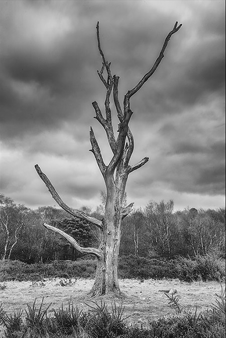 Dead Tree